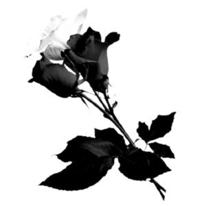 Black and White Rose Bundle