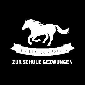Pferd- Zum reiten geboren zur Schule gezwungen