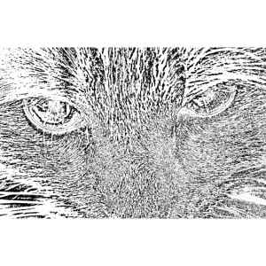 Kat kop (zwart)
