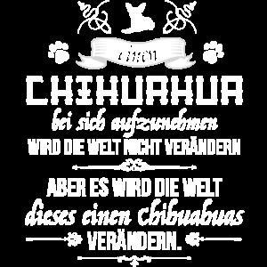 Chihuahua aufnehmen