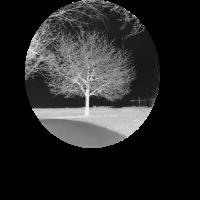 Baum bw