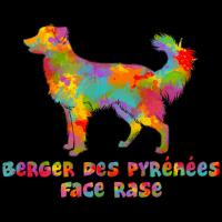 Pyrenean Shepherd Multicolor Gesicht rasiert