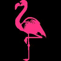 Flamingo pink rosa Vogel Sommer Tier Wasservogel