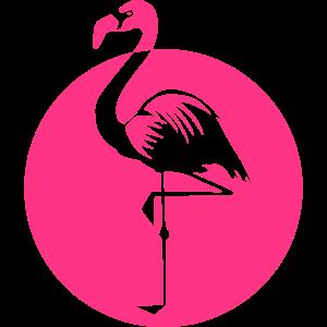 Flamingo pink rosa Vogel Sommer Wasservogel Kreis
