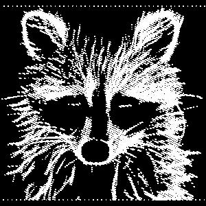 dormilón racoon