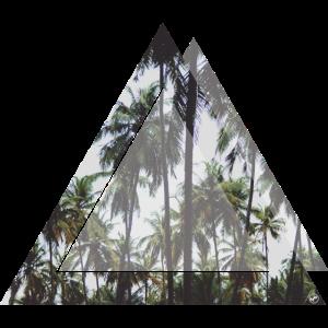 Dreieck Palmen