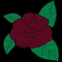 Rose, Kamelie