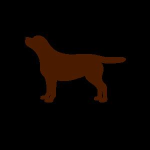 Gott schuf Labrador (braun)