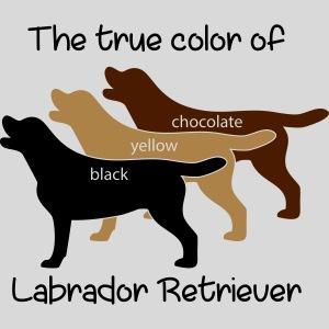 True Color Labrador