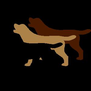 3 Labrador Farben