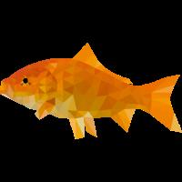 Polygon Goldfisch
