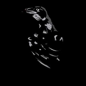 Raven Schwarz-Weiß-Skizze
