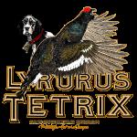 lyrurus tetrix