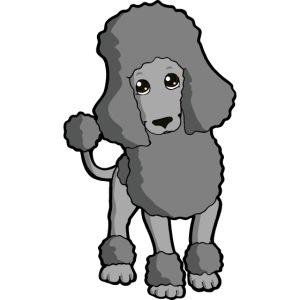 Barbone grigio