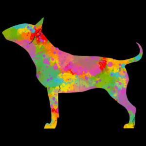 Farbige Bull Terrier