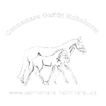 shirtgestuethohnhorst
