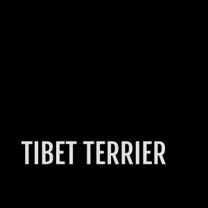 Tibet-Terrier - Schriftzug im schrägen Balken