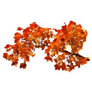 Herbstlaub Herbst Blätter