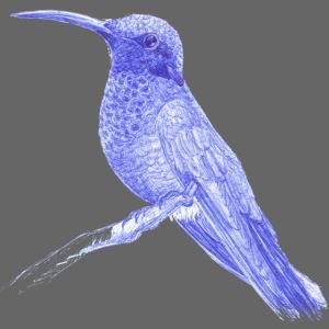Colibri au stylo-bille