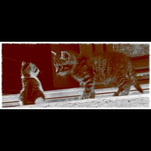 süsse Katzen Babys