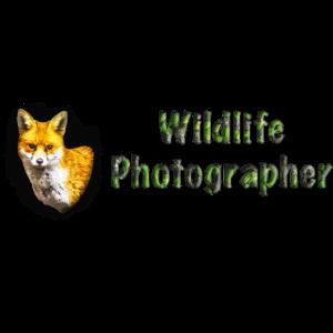 Wildlife Fotograf Fuchs