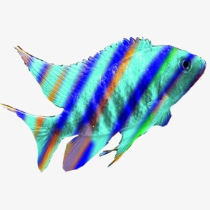 Rainbow peacock edited