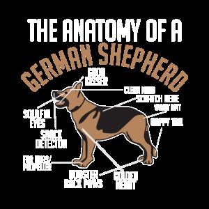 Anatomie Deutscher Schäferhund