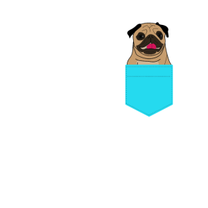 Pocket Pug Dog