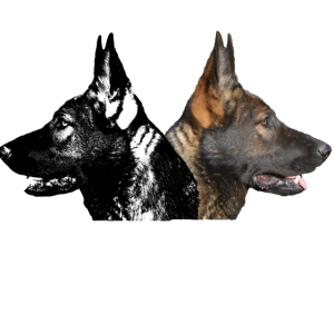 Schaeferhundkopf Hundesport Schäferhund