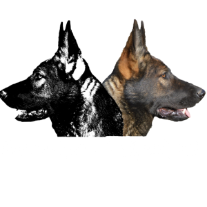 Hund,Hunde,Hundekopf,Hundegesicht,Schäferhund,hund
