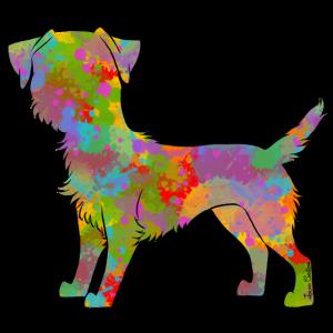 Border Terrier Multicolor
