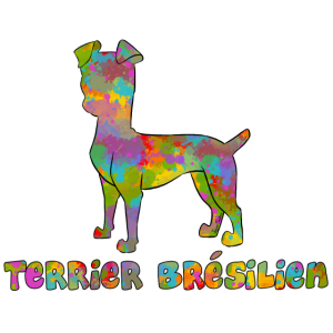 Brazilian Terrier Multicolor