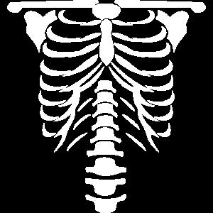 Skelett png