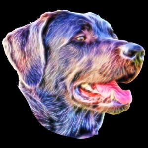 Hund Fraktal Bunt