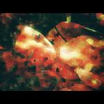 № 3 [somnium]