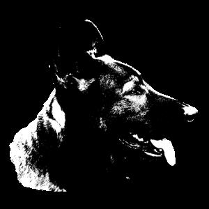Schäferhund,Hundekopf,Hundesport,Rassehund