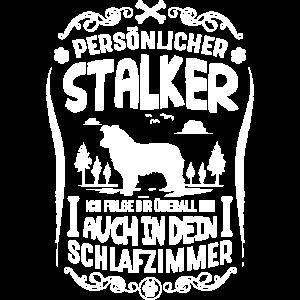 Border Collie persönlicher Stalker