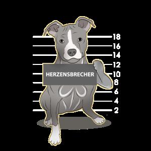 Staffordshire Bull Terrier Hund Geschenk