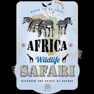 Zebras Africa Wildlife Safari Afrika Giraffen Löwe