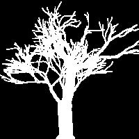 Der Baum in der Natur