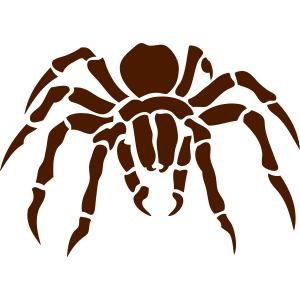 Spinne Spinne Spinnerin ragno Arana 2011