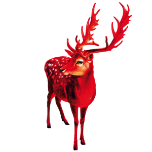 98 Roter Hirsch Winter Schnee Wunder Geweih Schnee