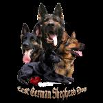 Old Ladys East German Shepherd Dog