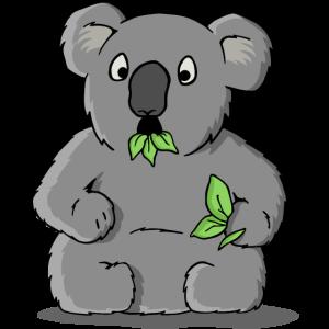 Erstaunter Koalabär
