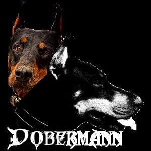 Dobermann,Hundegesicht ,Hundekopf,Hunde, Hund