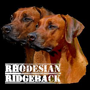Rhodesian Ridgeback Hundegesicht ,Hundekopf .Hunde