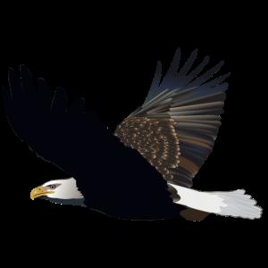 Der Flug des Steinadlers