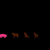 Nachwuchs Tierarzt