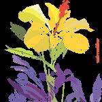 Flor Pacifico XL