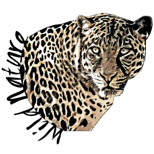 Leopard Wild Nature